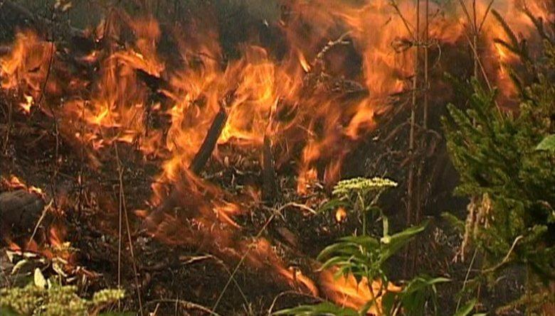 ლაგოდეხში ვაშლოვანის ქუჩაზე ცეცხლი ხმელ ბალახს გაუჩნდა