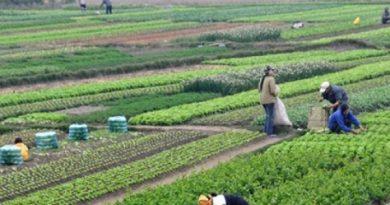 კახეთში ფერმერებს და მევენახეებს გადაადგილებასთან დაკავშირებით პრობლემები ექმნებათ