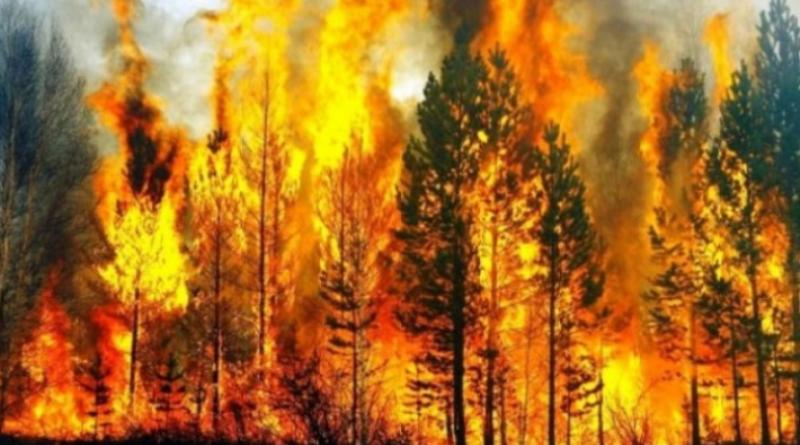 სოფელ კაჭრეთში ტყის საფარი და საძოვარი იწვის